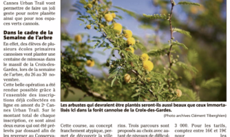 Cent mimosas plantés cette semaine grâce au Cannes Urban Trail