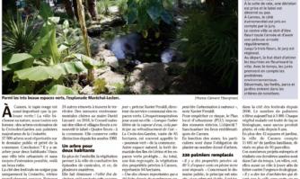 Arbres centenaires, palmiers majestueux... comment Cannes protège ses arbres et espaces naturels