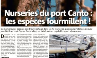 Nurseries du port Canto : les espèces fourmillent