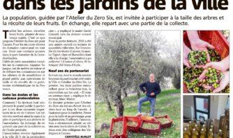 Les oliviers en partage dans les jardins de la ville